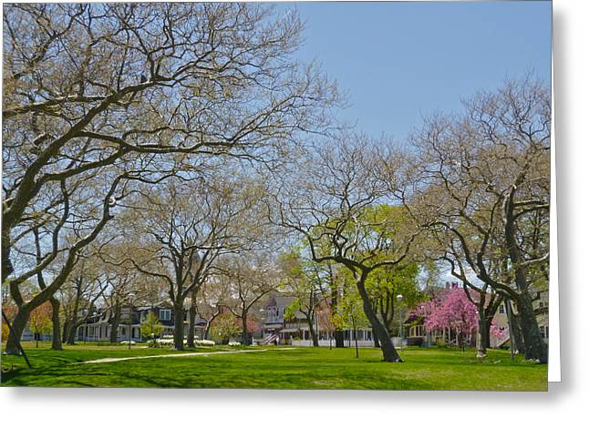 Sycamores In Spring 2 Greeting Card