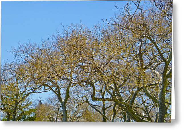 Sycamores In Spring Greeting Card