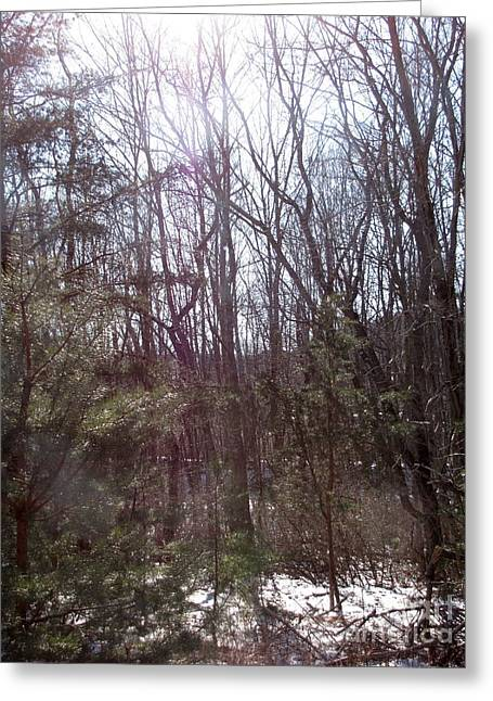Greeting Card featuring the photograph Sylphs by Melissa Stoudt