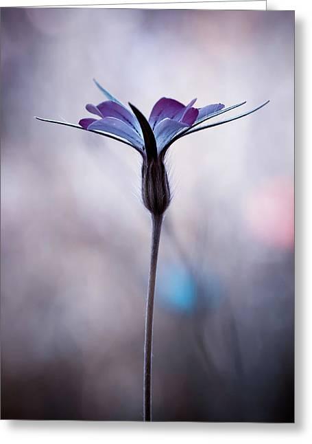 Sylvidra Greeting Card by Fabien Bravin