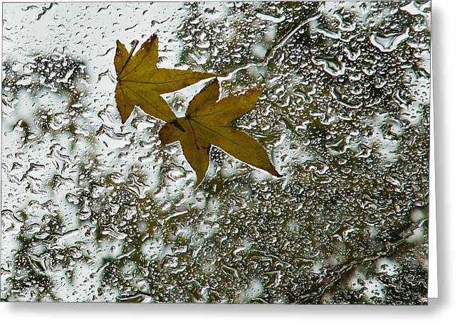 Symbols Of Autumn  Greeting Card