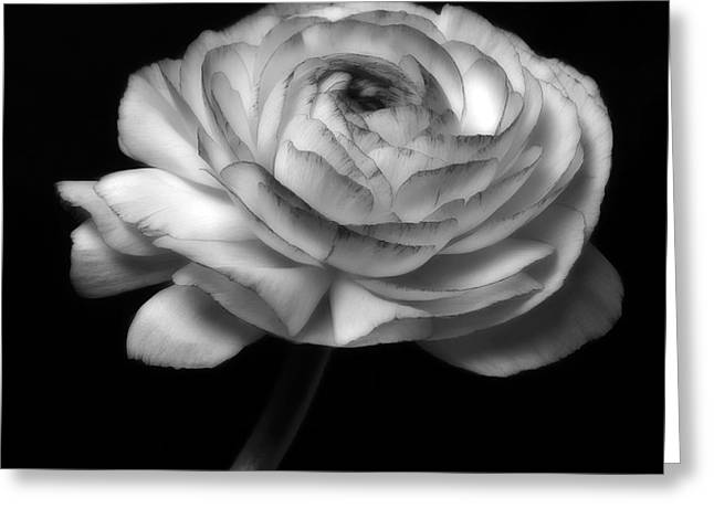 Black And White Roses Flowers Art Work Photography Greeting Card