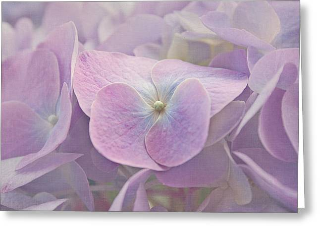 Symphony In Purple Greeting Card