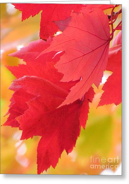 Greeting Card featuring the photograph Symphony Of Autumn 22 by France Laliberte