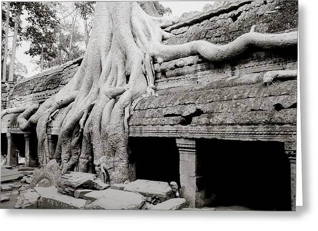 Ta Prohm Temple At Angkor Greeting Card by Shaun Higson