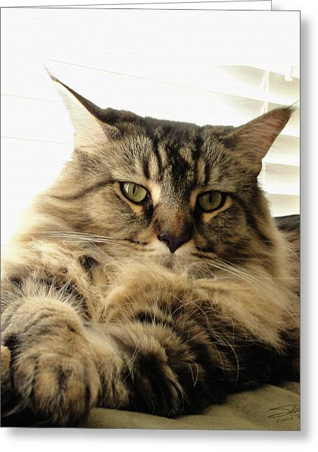 Tabby Coon Greeting Card