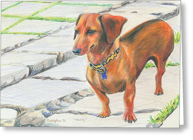 Taffy Greeting Card by Donna Turbyfill