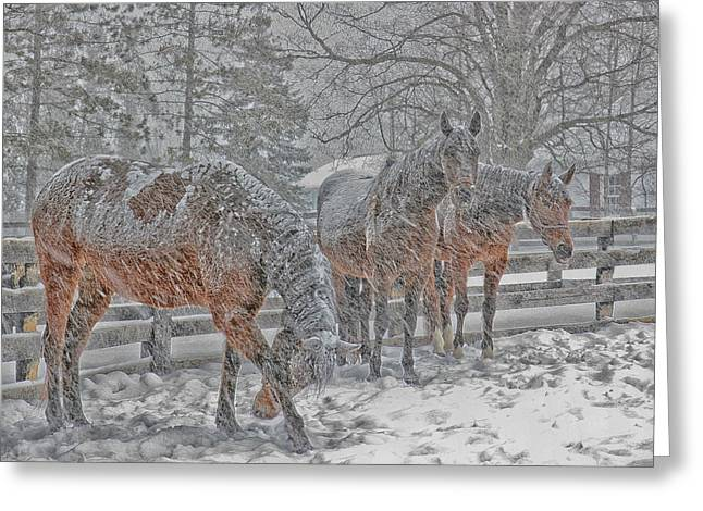 Greeting Card featuring the photograph Tails To The Wind by Gary Hall