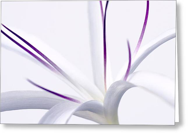 Tainted In Purple Greeting Card