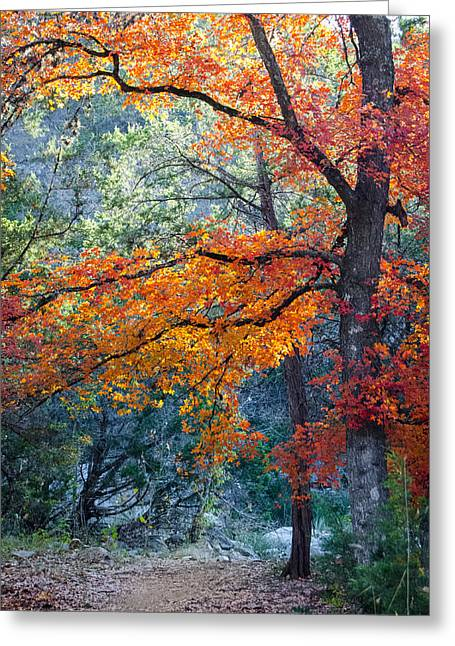 Take A Bough Greeting Card by Debbie Karnes
