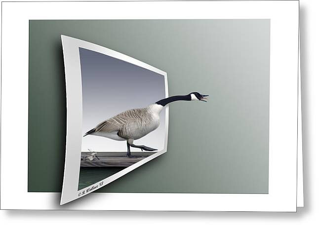 Take A Gander Greeting Card by Brian Wallace