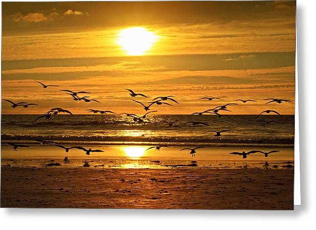 Take Flight At Sunset Greeting Card by Donna Pagakis
