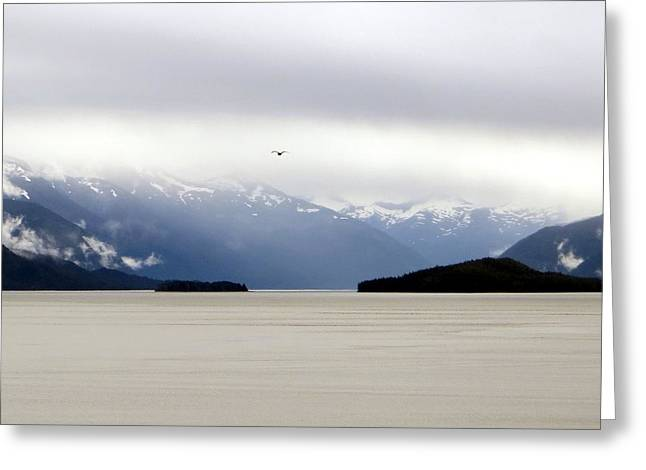 Greeting Card featuring the photograph Take Flight by Jennifer Wheatley Wolf
