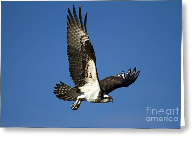 Take Flight Greeting Card by Mike  Dawson