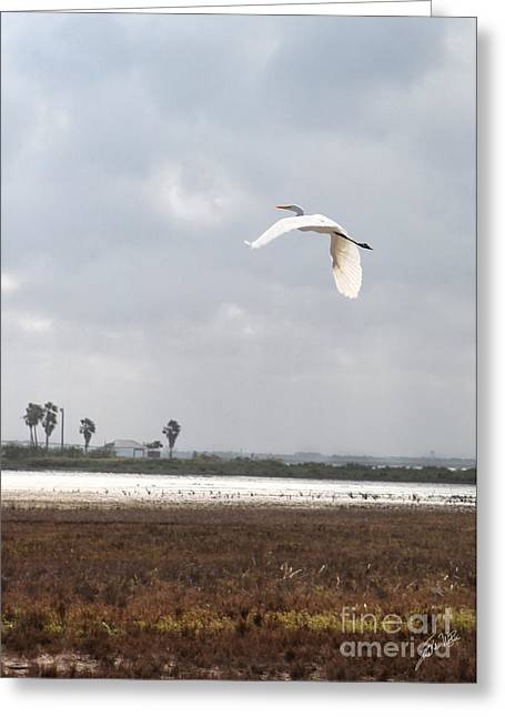 Greeting Card featuring the photograph Take Off by Erika Weber