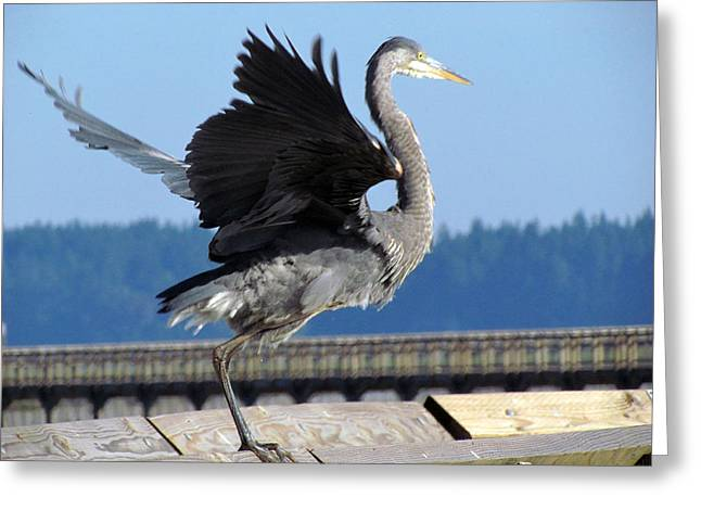 Greeting Card featuring the photograph Take Off by I'ina Van Lawick