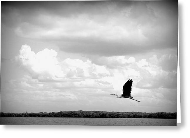 Take Off Greeting Card by Laurie Perry