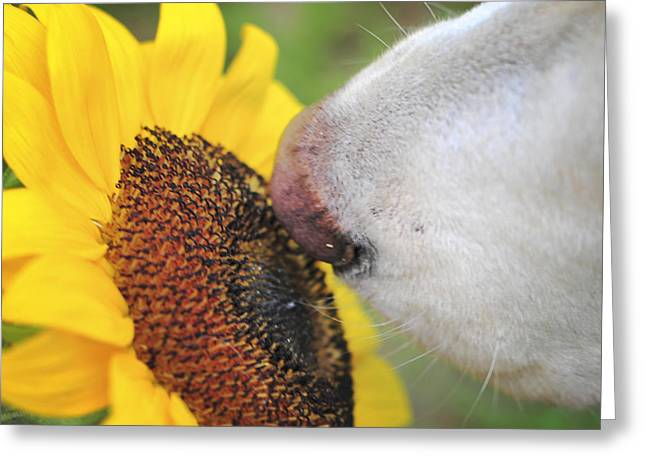 Take Time To Smell The Sunflowers Greeting Card by Terry DeLuco