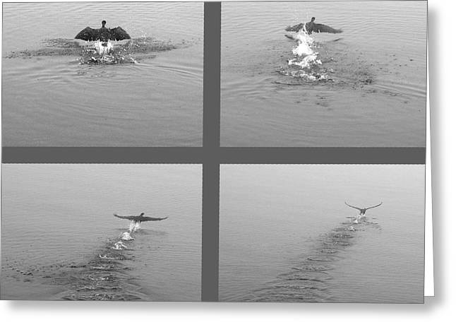 Greeting Card featuring the photograph Takeoff by Randi Grace Nilsberg
