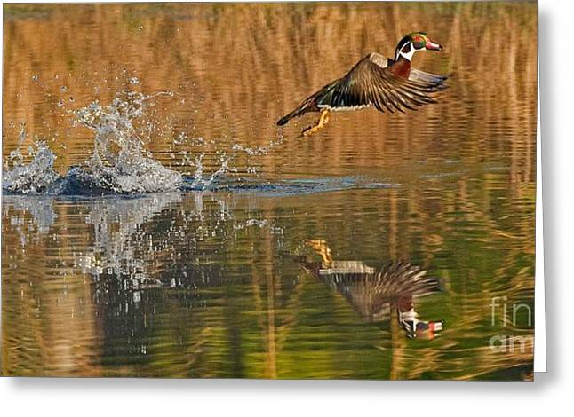 Takeoff Greeting Card by Wayne Bennett