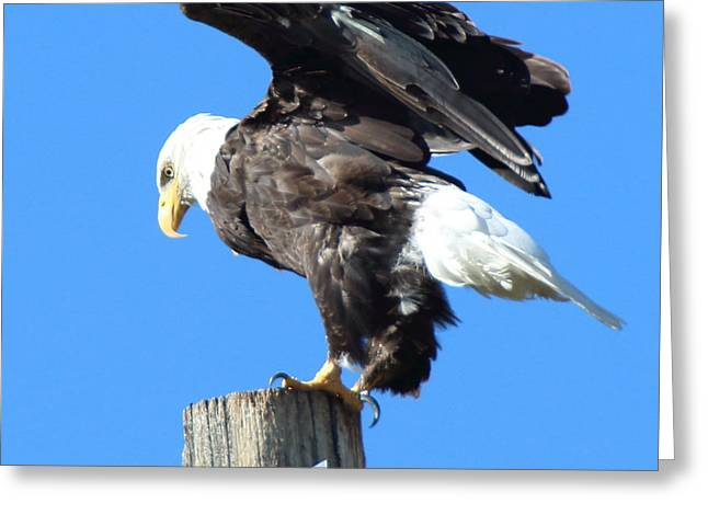 Taking Flight Greeting Card by Jeff Nelson