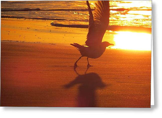 Greeting Card featuring the photograph Taking Flight by Nikki McInnes