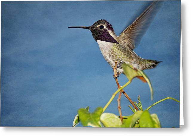 Taking Flight Greeting Card by Peggy Hughes