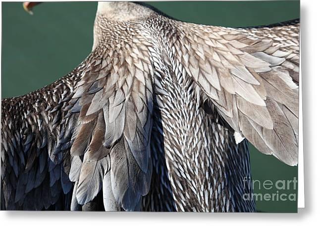 Taking Flight With A Brown Pelican 5d21703 Greeting Card by Wingsdomain Art and Photography