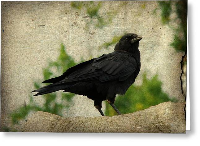 Blackbird Is Taking It All In Greeting Card by Gothicrow Images
