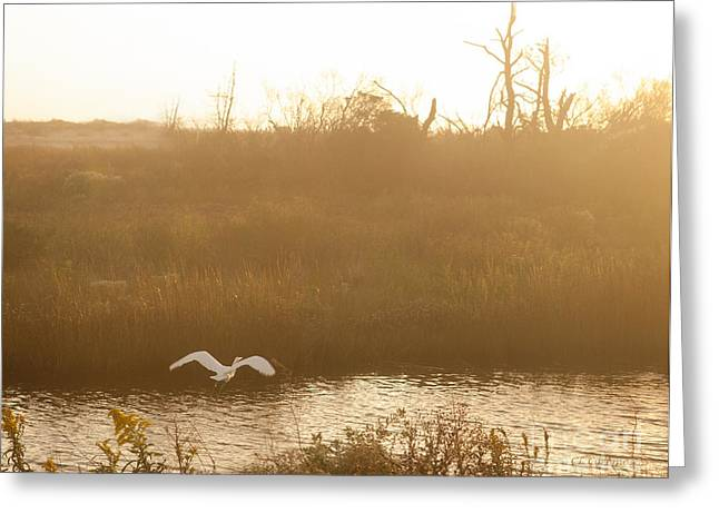 Greeting Card featuring the photograph Taking Off Into A Golden Sunrise by Carol Lynn Coronios