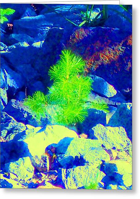 Greeting Card featuring the photograph Taking Root by Ann Johndro-Collins