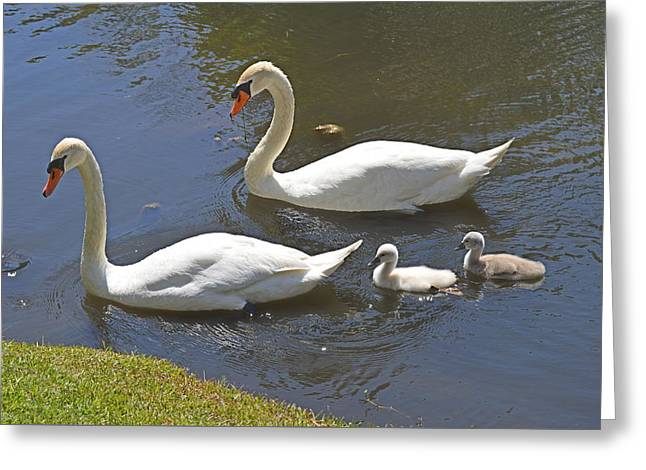 Taking The Kids Out Greeting Card by Judith Morris