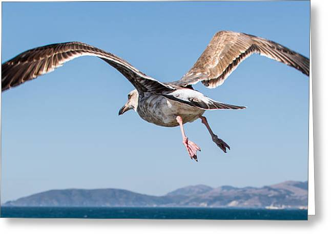 Taking To The Sky Greeting Card by Ian McMorran