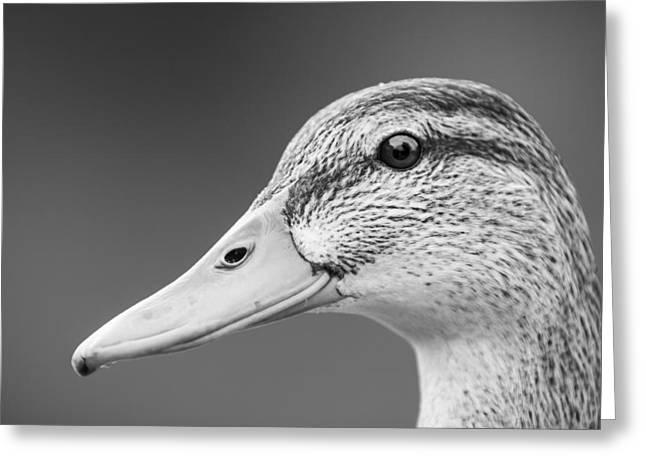 Talk Like A Duck Greeting Card