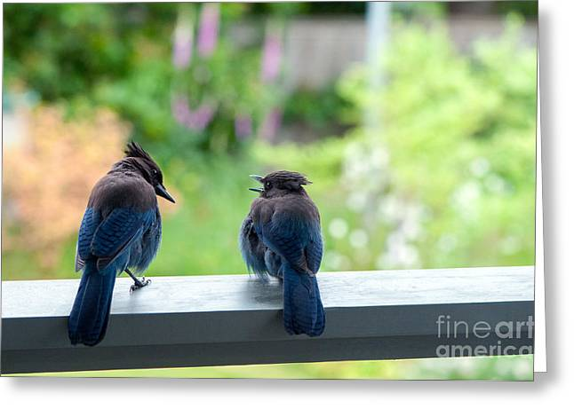 Talking Jays Greeting Card by Sharon Talson