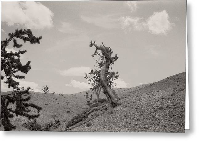 Talking Trees In Bryce Canyon Greeting Card