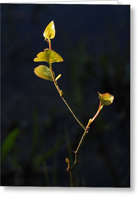 Greeting Card featuring the photograph Tall And Proud by Susan D Moody