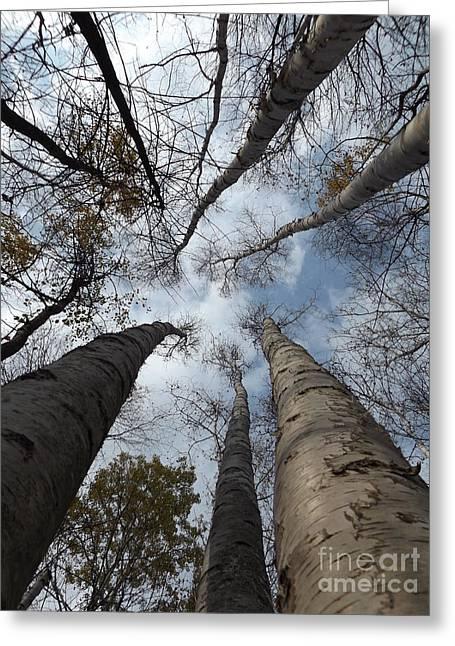 Tall Birch Circle Greeting Card by Erick Schmidt