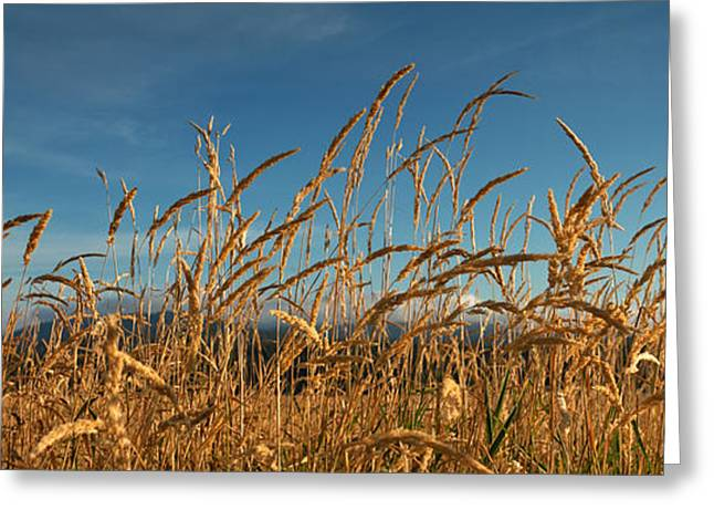 Tall Grass II Greeting Card by Beve Brown-Clark Photography