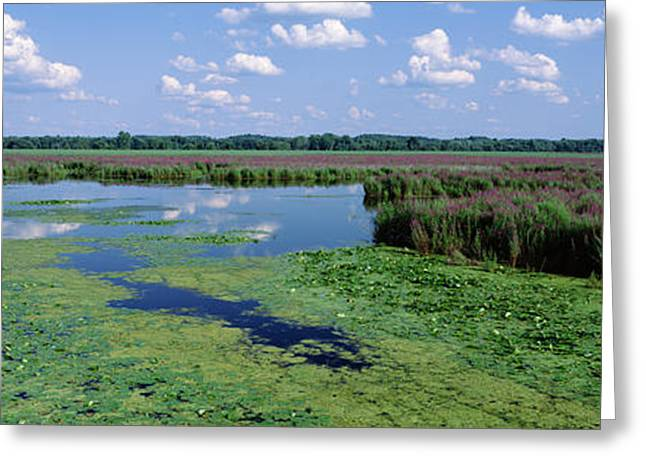 Tall Grass In A Lake, Finger Lakes Greeting Card by Panoramic Images