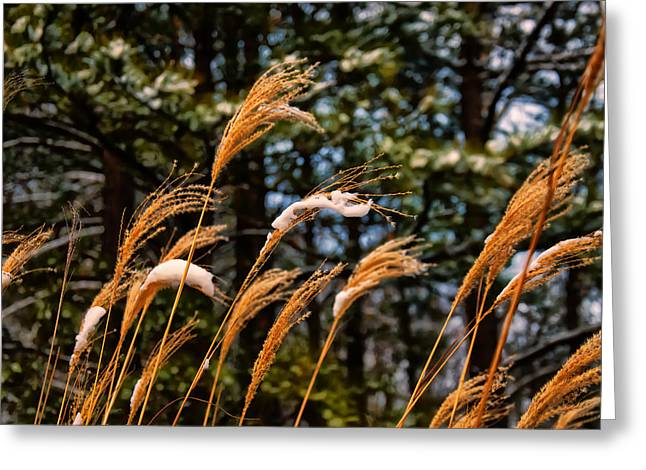 Tall Grass In Winter Greeting Card