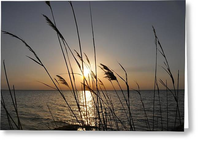 Tall Grass Sunset Greeting Card