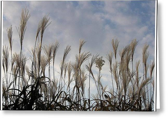 Tall Grasses And Blue Skies Greeting Card