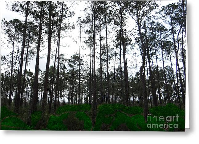 Tall Tree Forest Greeting Card