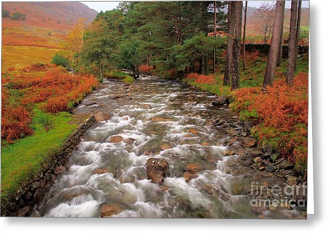 Tall Trees And Rushing Water Greeting Card by Wobblymol Davis