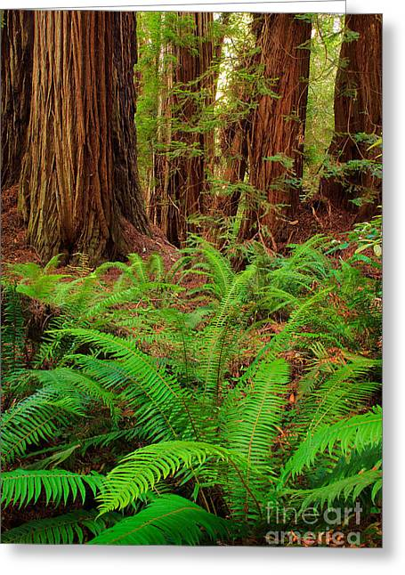 Tall Trees Grove Greeting Card by Inge Johnsson