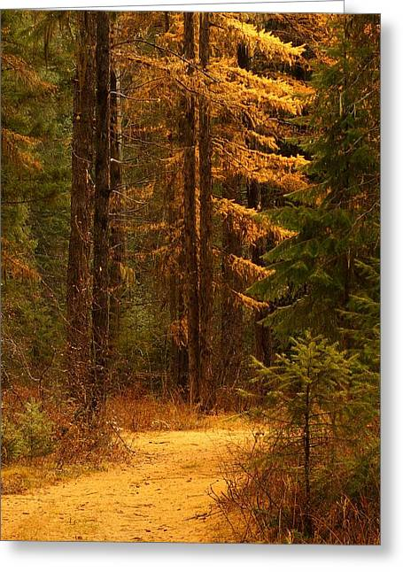 Tamarack Glow Greeting Card