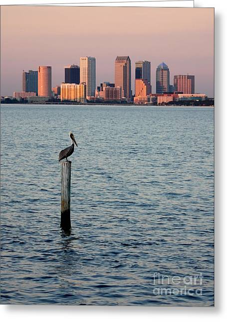Tampa Skyline And Pelican Greeting Card by Carol Groenen