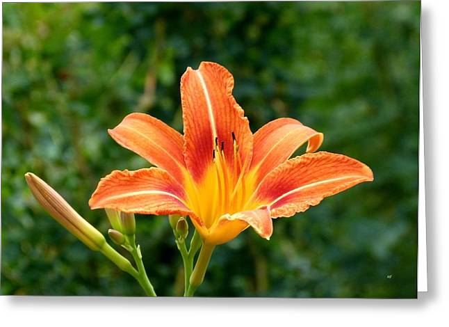 Tangerine Lily Greeting Card by Will Borden