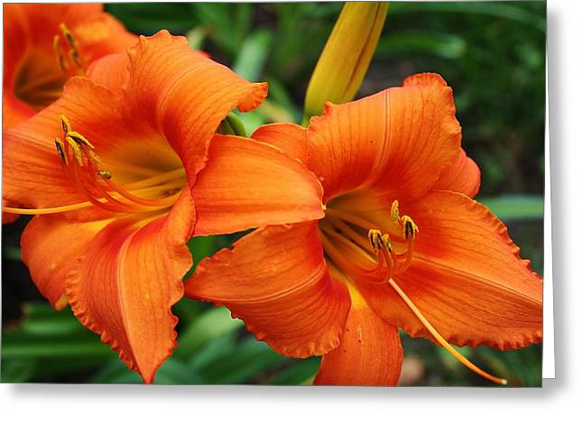 Greeting Card featuring the photograph Tangerine Lush Daylily 2 by Bruce Bley